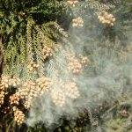 【PM2.5】なぜ?掛け布団が原因で花粉症の発症者が続出!