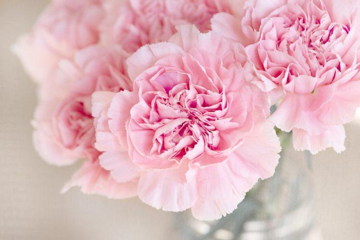 淡いピンクの花