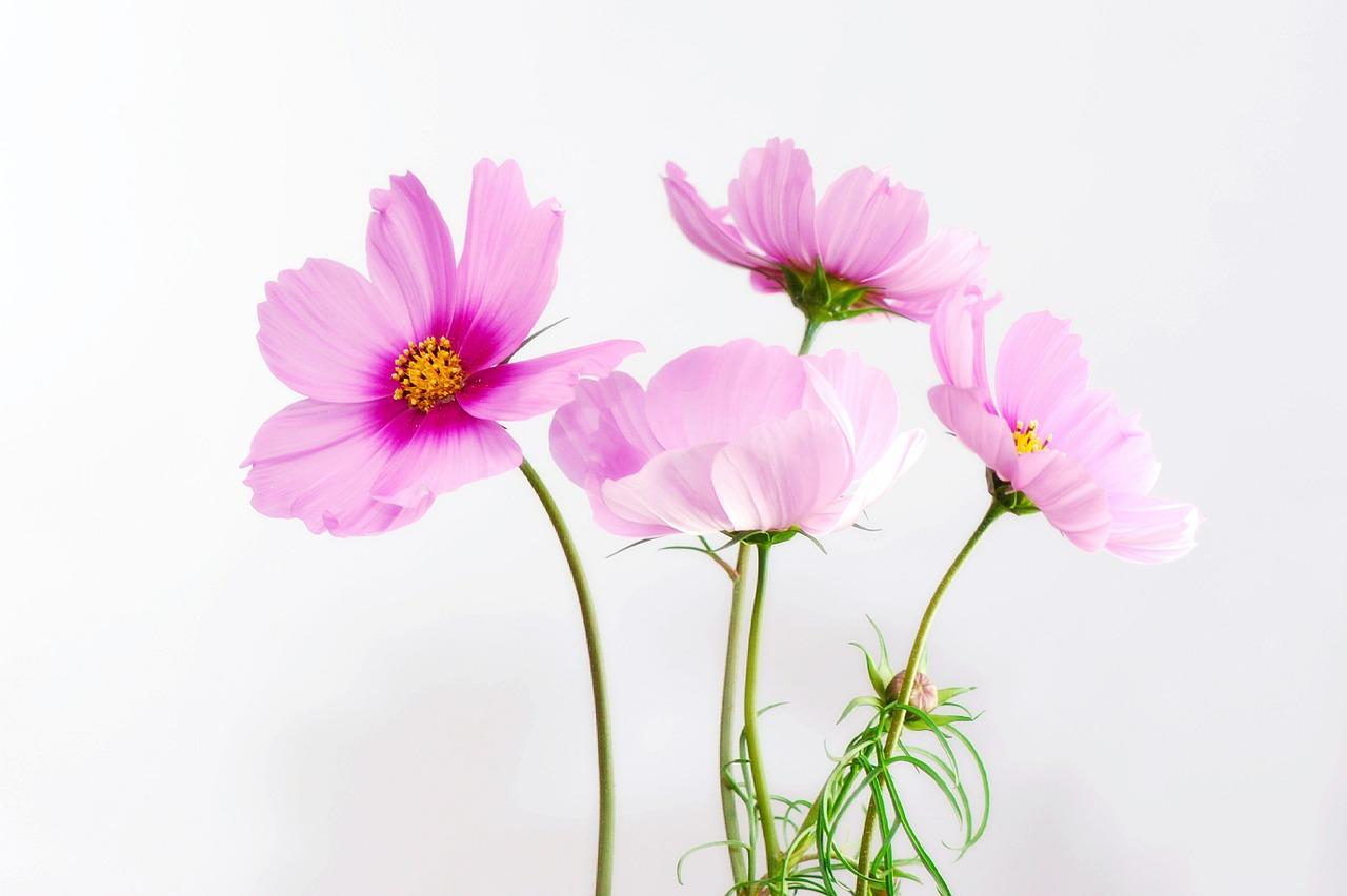 flower-smell
