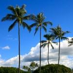 【簡単・劇的】部屋にハワイアンな風を吹かせる脇役がコレだ!