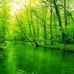 【差し色インテリア】緑は癒し系だがアクセントとして弱い?