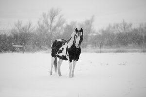 winter-1090649_1920