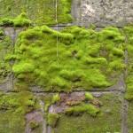 家の外壁に緑色の緑色のコケが付く原因と掃除方法