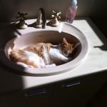 【いつも綺麗】洗面ボウルを効率的に掃除してピカピカを保つ方法