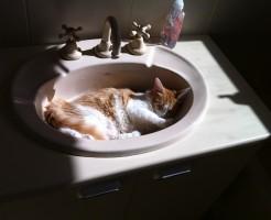 cat-444758_640