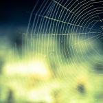 《一人暮らしの虫対策》クモ目線の家に侵入してくる理由と対策